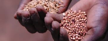 2014 Food Security Center Summer School (Fully Funded)!