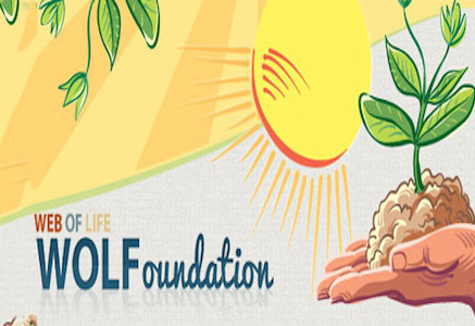Web Of Life (WOL) Foundation 2014 Essay Competition