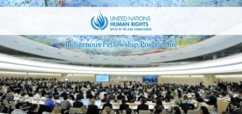 Apply: Indigenous Fellowship Programme 2015