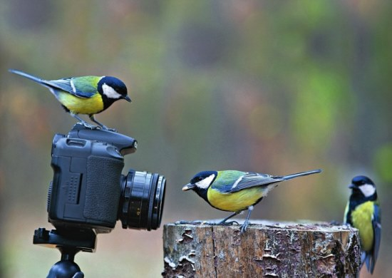 British Wildlife Photography Awards 2016 – £5,000 Prize and More