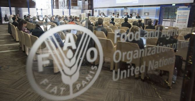 Internship Programme at Food and Agriculture Organization of the United Nations