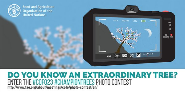Enter the COFO23 #ChampionTrees Photo Contest (Win a Trip to Rome)