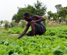 Apply to the Agriculture for Food Security 2030 Training