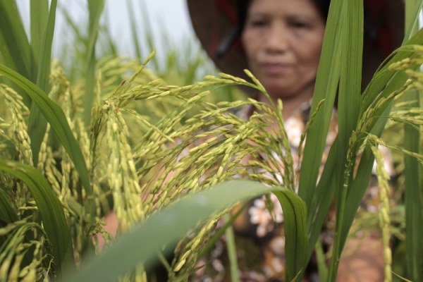 Olam Prize for Innovation in Food Security 2017 (Prize of US$50,000)
