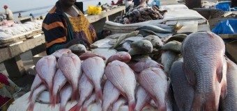 Earth Journalism Network West African Fisheries Reporting Grants 2017