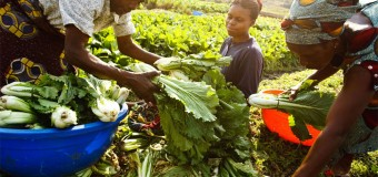 Africa Agri-food Development Programme (AADP) 2017