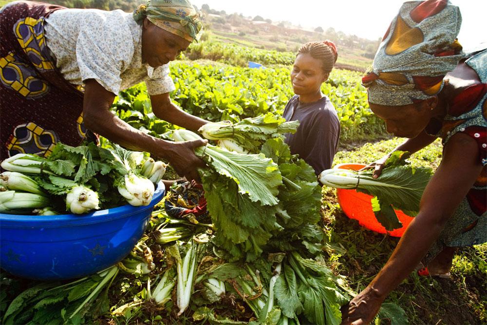 Africa Agri-food Development Programme (AADP) 2017