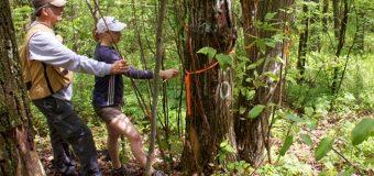 Tree Fund John Z. Duling Grant Program 2017 (Up to $25,000 Grant)