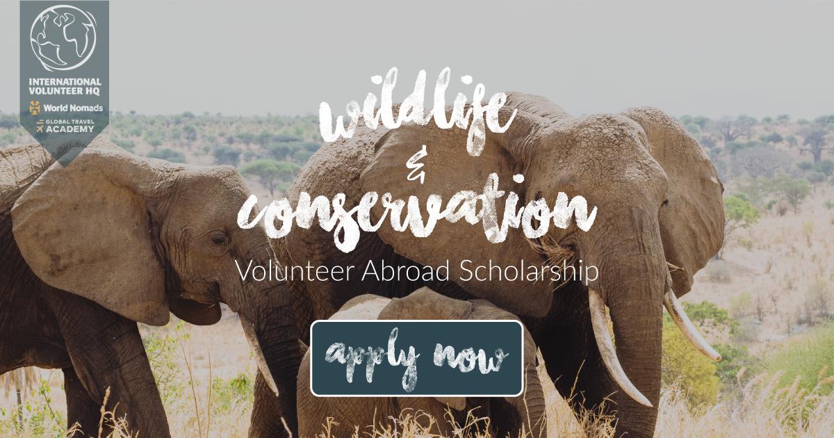 IVHQ Wildlife & Conservation Volunteer Abroad Scholarship 2017-2018 (Funded)