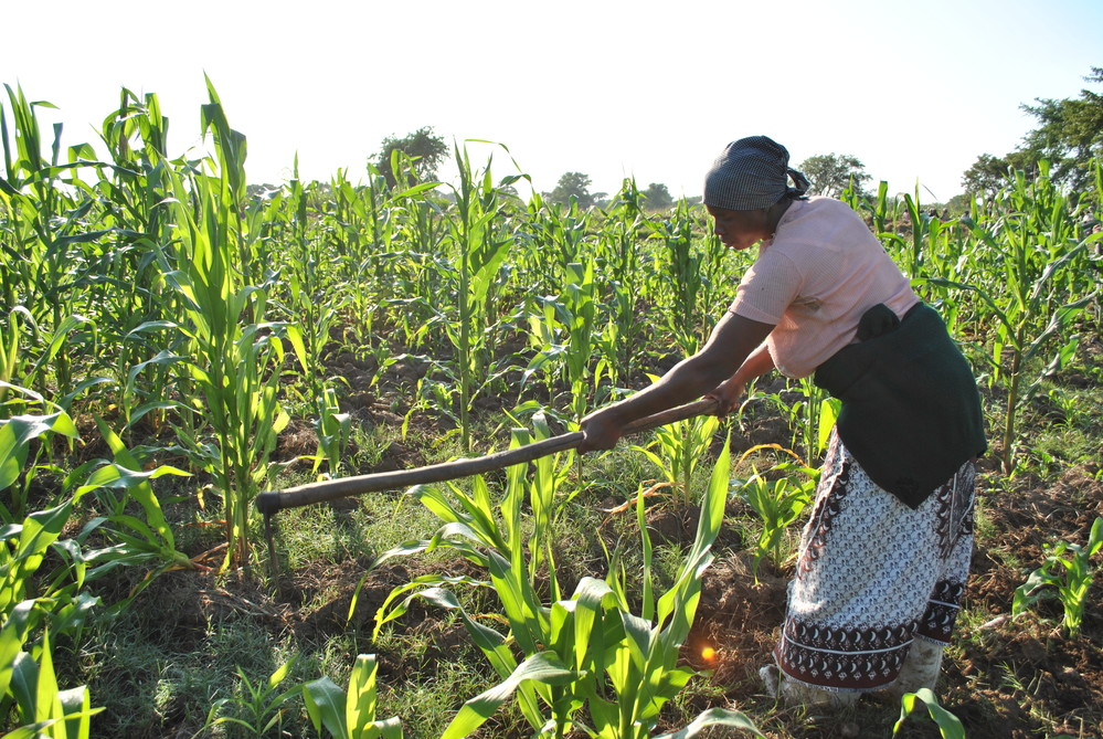 Thomson Reuters Foundation Workshop on Reporting Rural Poverty and Agricultural Development – Rome, Italy (Funded)
