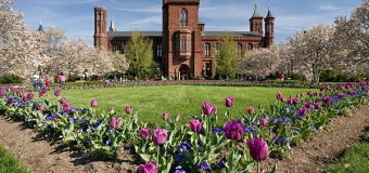 Smithsonian Institution Fellowship Program 2019 for Graduate, Predoctoral, Postdoctoral and Senior Researchers
