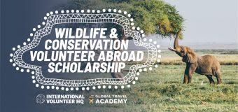 IVHQ's Wildlife & Conservation Volunteer Abroad Scholarship 2018/19