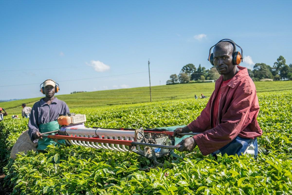Call for Nominations: Global Landscapes Forum (GLF) Landscape Heroes 2018