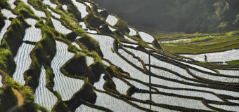Thomson Reuters Foundation Reporting Rural Poverty and Agricultural Development 2019 (Fully-funded to Rome, Italy)