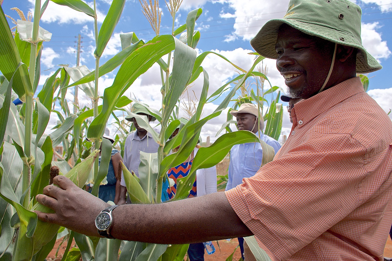 CIMMYT Post-Doctoral Fellowship in Applied Agricultural Statistics/Biometrics 2019 (Fully-funded)