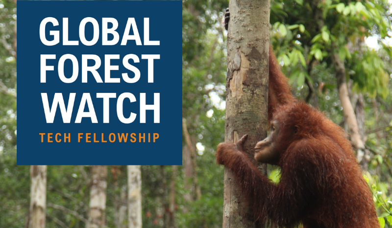 Global Forest Watch Technology Fellowship 2019 ($6,000 stipend and trip to Washington DC)