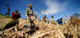 World Food Programme/Cargill Global Innovation Challenge for Zero Hunger 2019