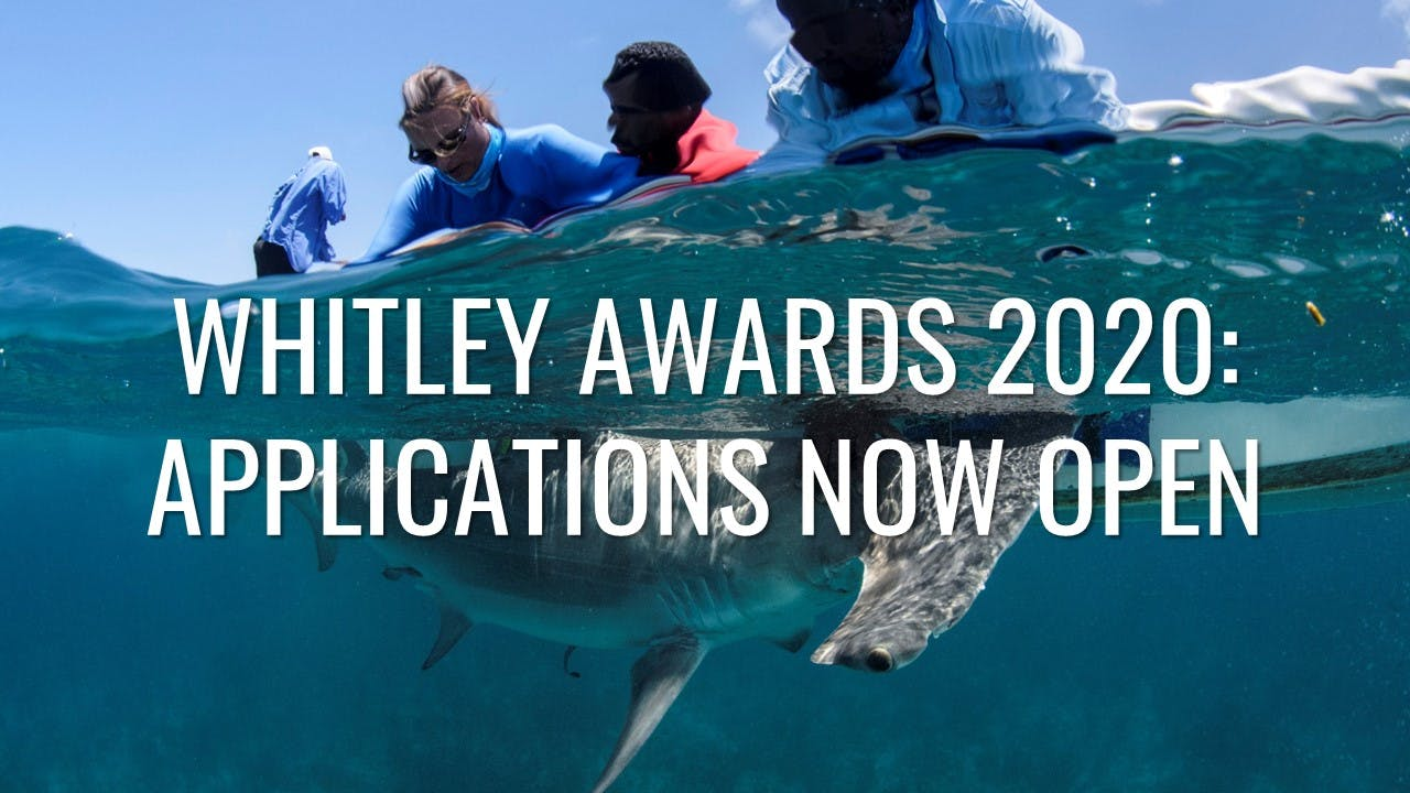 Whitley Awards 2020 for Mid-career Conservationists (Up to £40,000 GBP)