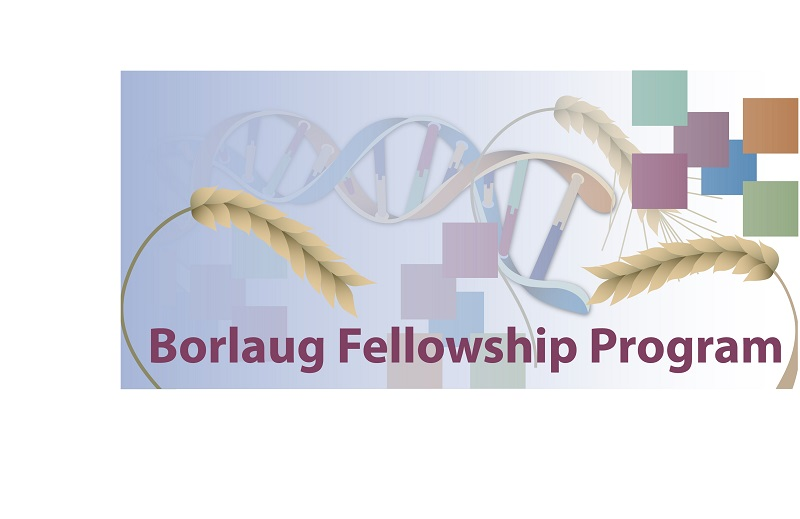 Borlaug International Agricultural Science and Technology Fellowship Program 2020 (Funded to the US)