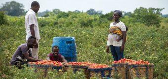 Caravan Africa Entrepreneurship Program 2020 for Innovators in Mauritius