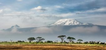 Call for Proposals: Internews' Earth Journalism Network Reporting on Conservation and Wildlife Issues in East Africa 2020 (US$1,000 in funding)