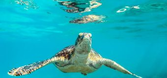 Internews' Earth Journalism Network (EJN) Indian Ocean Marine Science Workshop 2020 (Fully-funded)