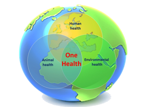 One Health Advocacy and Mentorship (OHAM) Program 2020 for Students and Young Professionals