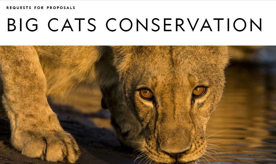 National Geographic Big Cats Conservation Grants 2020 (up to $100,000)
