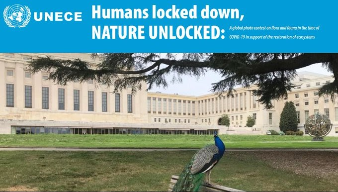 "UNECE ""Humans Locked Down, Nature Unlocked"" Global Photo Contest 2020"