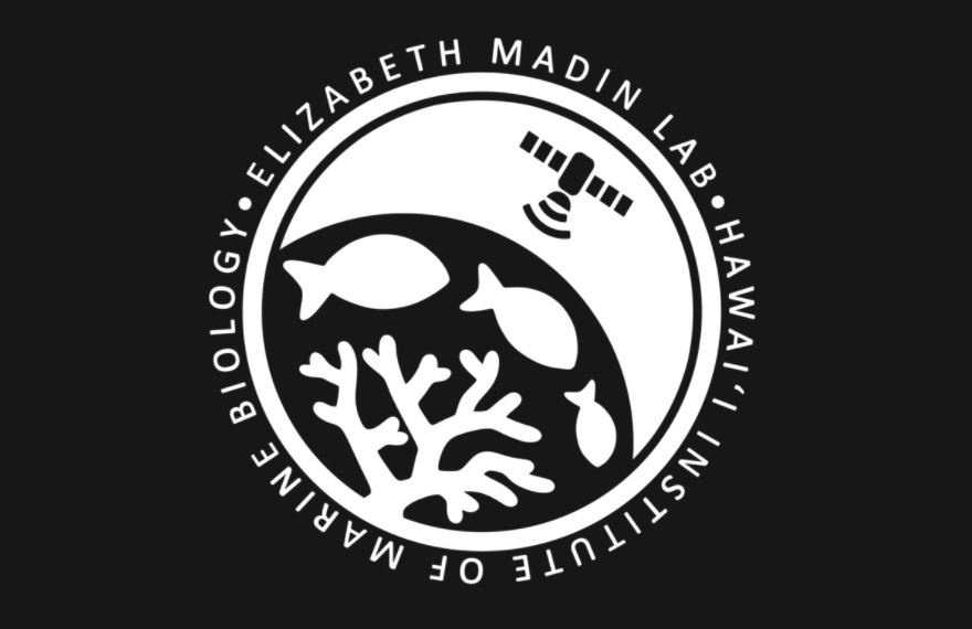 Elizabeth Madin Lab Post-Doctoral Research Fellowship in Quantitative Conservation Ecology and Machine Learning 2021/2022