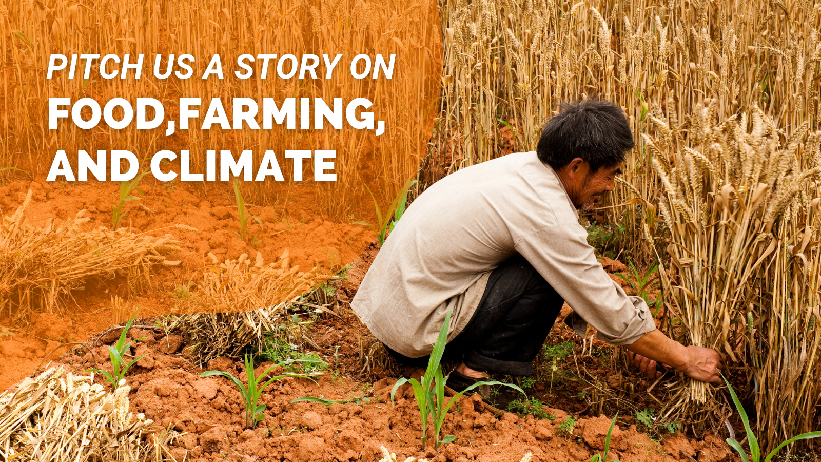 Calling Journalists: Pitch a Food, Farming and Climate Story to Climate Tracker